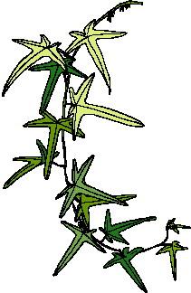 animated-leaf-image-0135