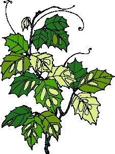 animated-leaf-image-0136