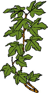 animated-leaf-image-0138