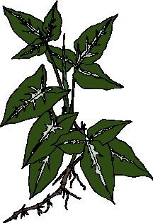 animated-leaf-image-0139