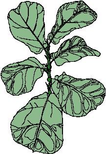 animated-leaf-image-0140