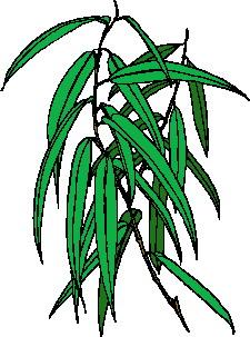 animated-leaf-image-0141