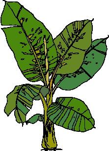 animated-leaf-image-0142