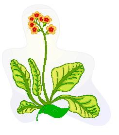 animated-leaf-image-0143