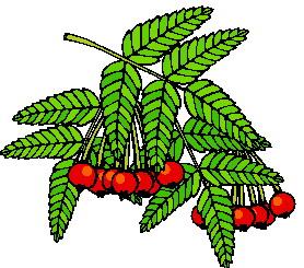 animated-leaf-image-0145