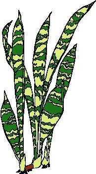 animated-leaf-image-0146