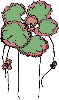 animated-leaf-image-0147