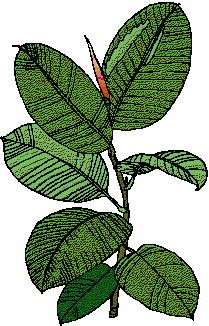 animated-leaf-image-0148