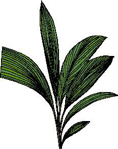 animated-leaf-image-0149