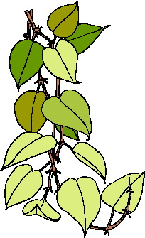animated-leaf-image-0150