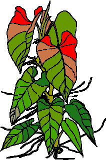 animated-leaf-image-0151
