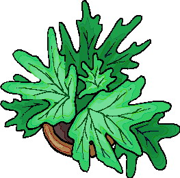 animated-leaf-image-0152