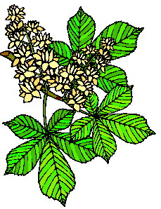 animated-leaf-image-0153