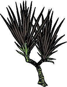 animated-leaf-image-0155