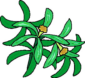 animated-leaf-image-0156