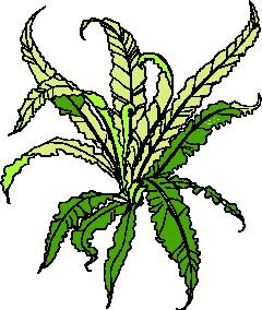 animated-leaf-image-0158
