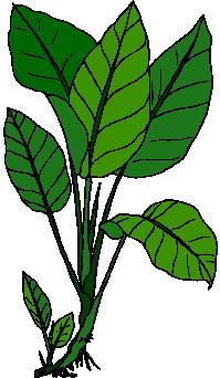 animated-leaf-image-0159