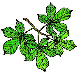 animated-leaf-image-0160
