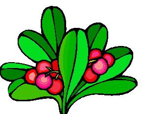 animated-leaf-image-0161