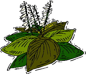 animated-leaf-image-0162