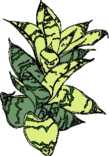 animated-leaf-image-0164