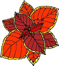 animated-leaf-image-0165