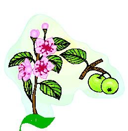 animated-leaf-image-0166
