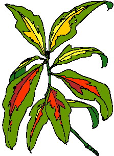 animated-leaf-image-0170