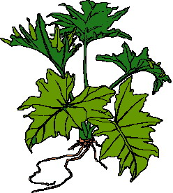 animated-leaf-image-0174