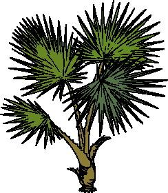 animated-leaf-image-0177