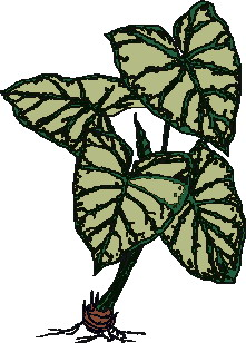 animated-leaf-image-0179