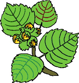 animated-leaf-image-0180