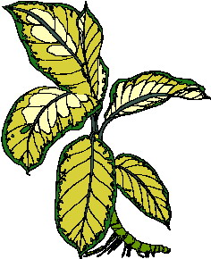animated-leaf-image-0182
