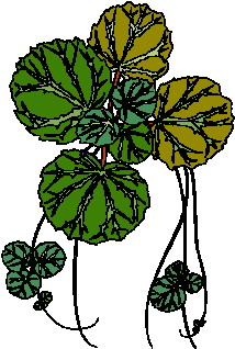 animated-leaf-image-0184