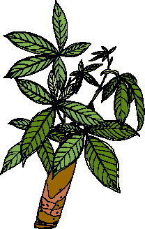 animated-leaf-image-0187