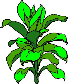 animated-leaf-image-0191