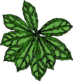 animated-leaf-image-0192