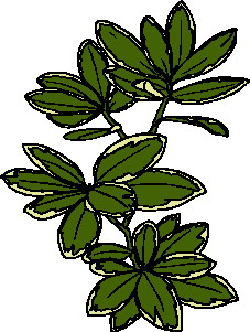 animated-leaf-image-0194