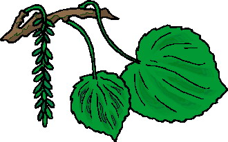 animated-leaf-image-0196
