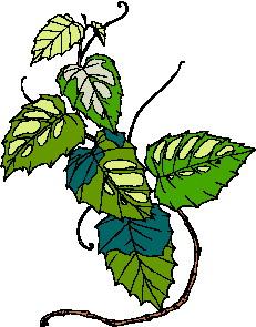 animated-leaf-image-0197