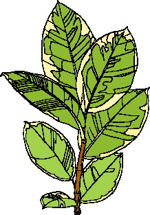 animated-leaf-image-0198