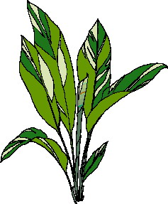 animated-leaf-image-0199