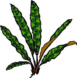 animated-leaf-image-0208