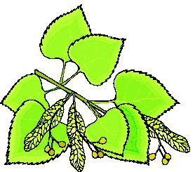 animated-leaf-image-0210