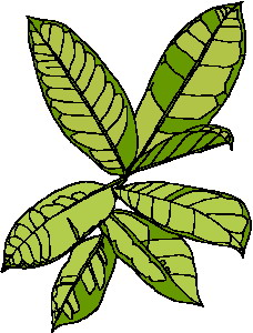 animated-leaf-image-0211