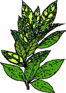 animated-leaf-image-0213