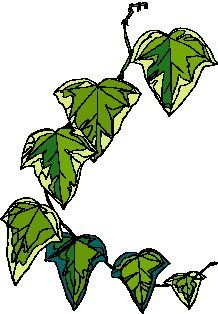 animated-leaf-image-0214