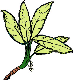 animated-leaf-image-0215
