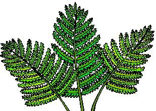 animated-leaf-image-0216