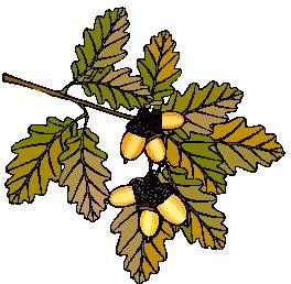 animated-leaf-image-0219